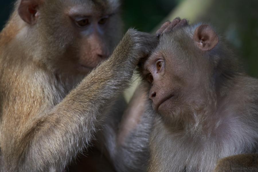 Khao Yai Macaques Nikon 200-500mm f5.6